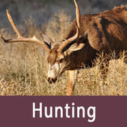 hunting in bryce canyon