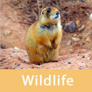 Wildlife in Bryce Canyon