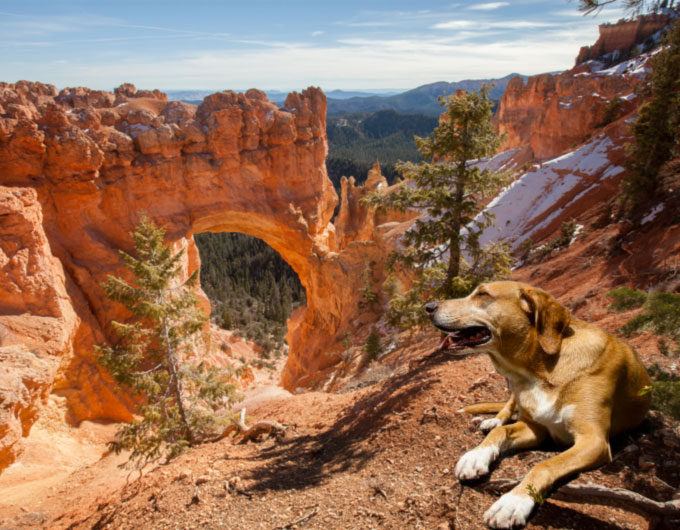 What to expect with pets in Bryce Canyon National Park